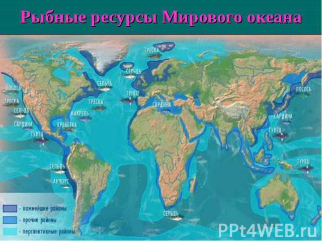 Рыбные ресурсы Мирового океана