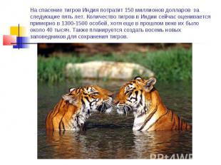 На спасение тигров Индия потратит 150 миллионов долларов за следующие пять лет.