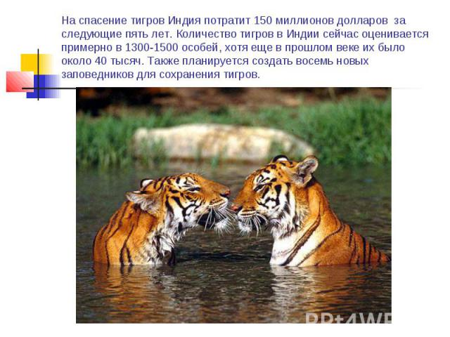 На спасение тигров Индия потратит 150 миллионов долларов за следующие пять лет. Количество тигров в Индии сейчас оценивается примерно в 1300-1500 особей, хотя еще в прошлом веке их было около 40 тысяч. Также планируется создать восемь новых заповедн…