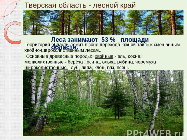 Тверская область - лесной край