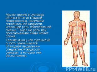 Малое трение в суставах объясняется их гладкой поверхностью, наличием синовиальн