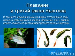 Плавание и третий закон Ньютона В процессе движения рыбы и пиявки отталкивают во
