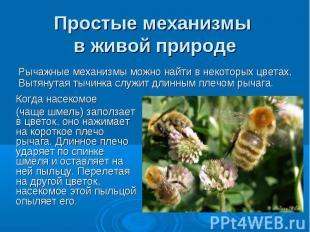 Простые механизмы в живой природе Рычажные механизмы можно найти в некоторых цве