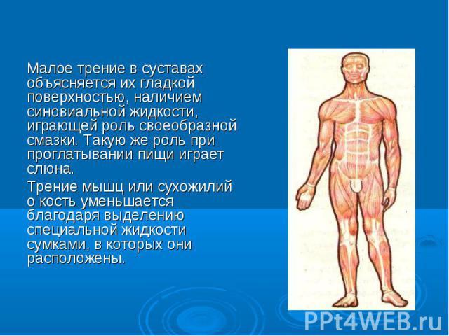 Малое трение в суставах объясняется их гладкой поверхностью, наличием синовиальной жидкости, играющей роль своеобразной смазки. Такую же роль при проглатывании пищи играет слюна. Малое трение в суставах объясняется их гладкой поверхностью, наличием …