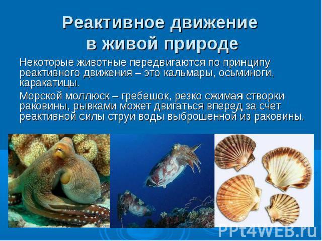 Реактивное движение в живой природе Некоторые животные передвигаются по принципу реактивного движения – это кальмары, осьминоги, каракатицы. Морской моллюск – гребешок, резко сжимая створки раковины, рывками может двигаться вперед за счет реактивной…