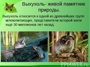 Выхухоль относится к одной из древнейших групп млекопитающих, представители кото