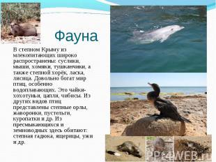 В степном Крыму из млекопитающих широко распространены: суслики, мыши, хомяки, т