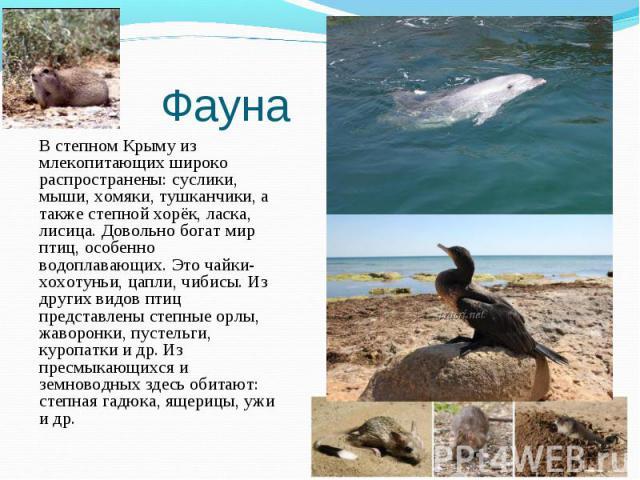 В степном Крыму из млекопитающих широко распространены: суслики, мыши, хомяки, тушканчики, а также степной хорёк, ласка, лисица. Довольно богат мир птиц, особенно водоплавающих. Это чайки-хохотуньи, цапли, чибисы. Из других видов птиц представлены с…