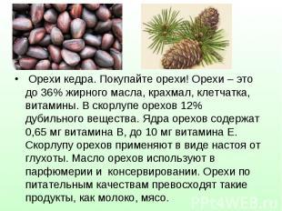 Орехи кедра. Покупайте орехи! Орехи – это до 36% жирного масла, крахмал, клетчат