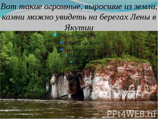 Вот такие огромные, выросшие из земли, камни можно увидеть на берегах Лены в Якутии
