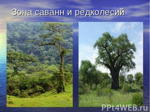 Зона саванн и редколесий