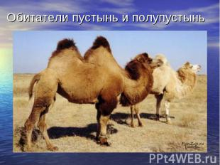 Обитатели пустынь и полупустынь