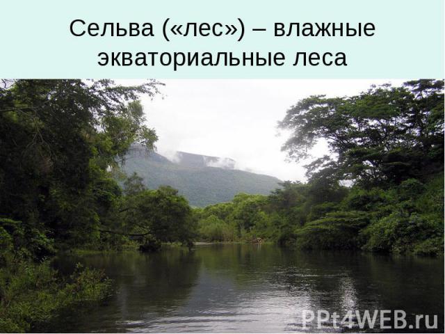 Сельва («лес») – влажные экваториальные леса
