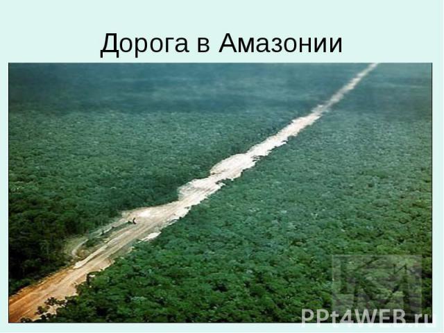 Дорога в Амазонии