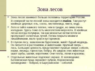 Зона лесов занимает больше половины территории России. Зона лесов занимает больш