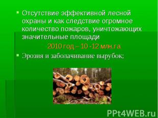 Отсутствие эффективной лесной охраны и как следствие огромное количество пожаров