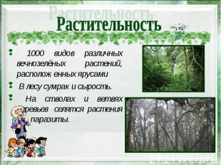 1000 видов различных вечнозелёных растений, расположенных ярусами 1000 видов раз