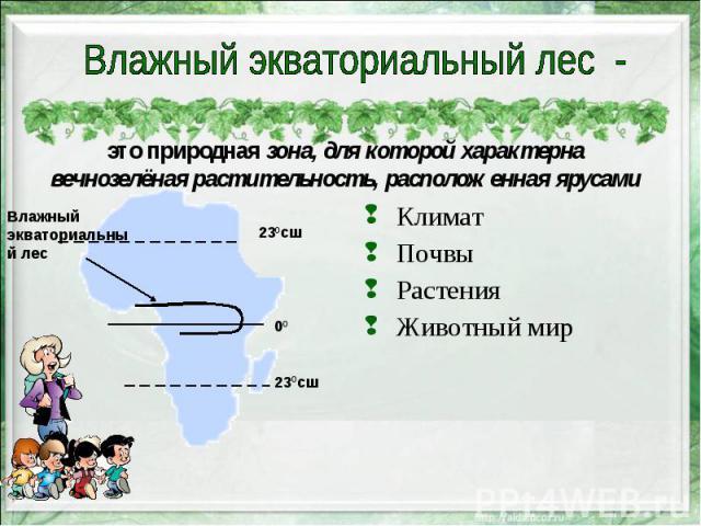 это природная зона, для которой характерна вечнозелёная растительность, расположенная ярусами Климат Почвы Растения Животный мир