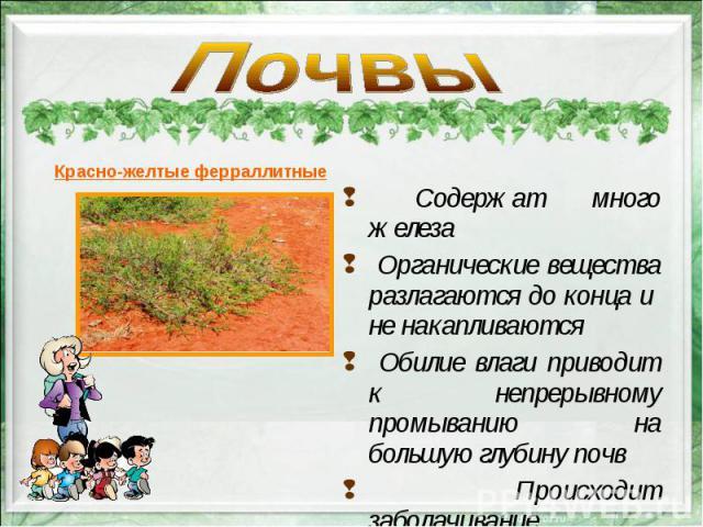Содержат много железа Содержат много железа Органические вещества разлагаются до конца и не накапливаются Обилие влаги приводит к непрерывному промыванию на большую глубину почв Происходит заболачивание