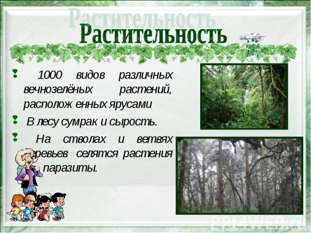 1000 видов различных вечнозелёных растений, расположенных ярусами 1000 видов различных вечнозелёных растений, расположенных ярусами В лесу сумрак и сырость. На стволах и ветвях деревьев селятся растения – паразиты.
