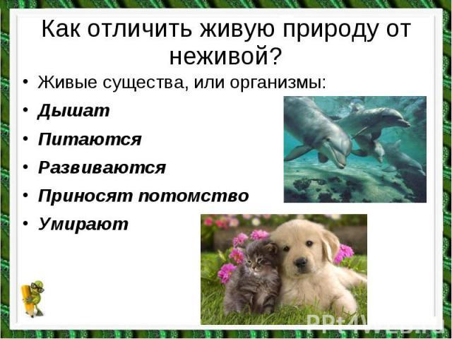 Живые существа, или организмы: Живые существа, или организмы: Дышат Питаются Развиваются Приносят потомство Умирают