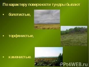 По характеру поверхности тундры бывают По характеру поверхности тундры бывают бо