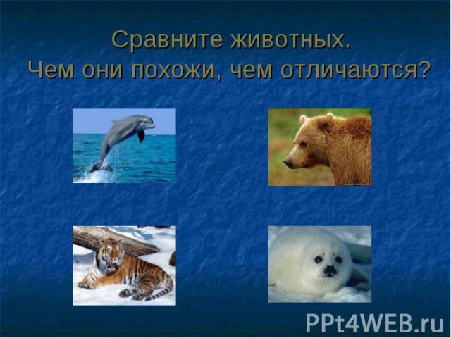 Сравните животных. Чем они похожи, чем отличаются?