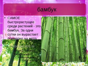 бамбук САМОЕ быстрорастущее среди растений - это бамбук. За одни сутки он выраст