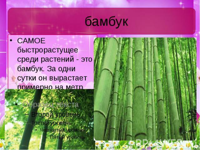 бамбук САМОЕ быстрорастущее среди растений - это бамбук. За одни сутки он вырастает примерно на метр.