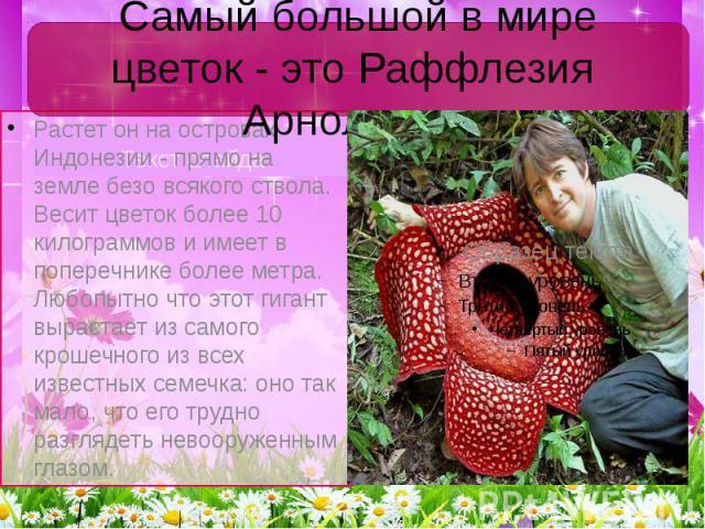 Самый большой в мире цветок - это Раффлезия Арнольди Текст слайда