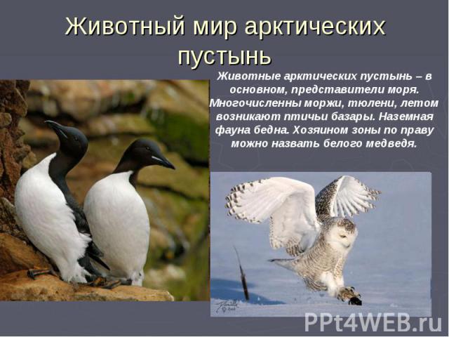 Животный мир арктических пустынь
