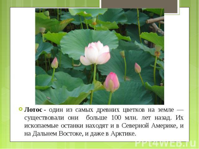 Лотос- один из самых древних цветков на земле — существовали они больше 100 млн. лет назад. Их ископаемые останки находят и в Северной Америке, и на Дальнем Востоке, и даже в Арктике. Лотос- один из самых древних цветков на земле — сущес…