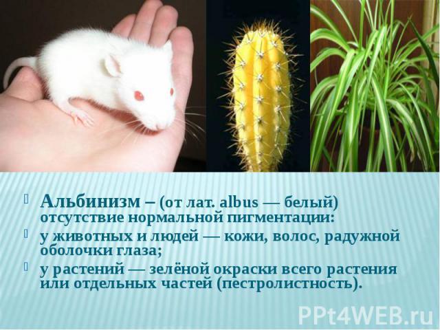 Альбинизм – (от лат. albus — белый) отсутствие нормальной пигментации: Альбинизм – (от лат. albus — белый) отсутствие нормальной пигментации: у животных и людей — кожи, волос, радужной оболочки глаза; у растений — зелёной окраски всего растения или …