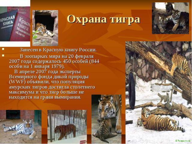 Охрана тигра Занесен в Красную книгу России. В зоопарках мира на 20 февраля 2007 года содержалось 450 особей (844 особи на 1 января 1979). В апреле 2007 года эксперты Всемирного фонда дикой природы (WWF) объявили, что популяция амурских тигров дости…