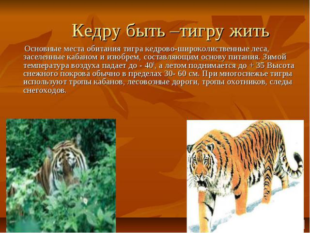 Кедру быть –тигру жить Основные места обитания тигра кедрово-широколиственные леса, заселенные кабаном и изюбрем, составляющим основу питания. Зимой температура воздуха падает до - 400, а летом поднимается до + 35 Высота снежного покрова обычно в пр…