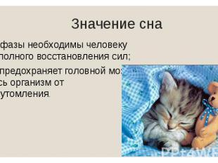 Значение сна Обе фазы необходимы человеку для полного восстановления сил; Сон пр