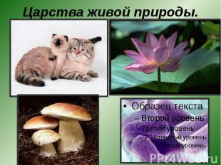 Царства живой природы.
