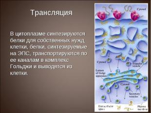 В цитоплазме синтезируются белки для собственных нужд клетки, белки, синтезируем
