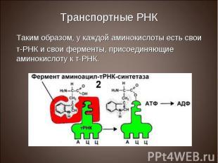 Таким образом, у каждой аминокислоты есть свои Таким образом, у каждой аминокисл
