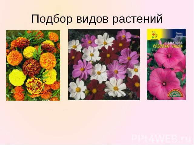 Подбор видов растений
