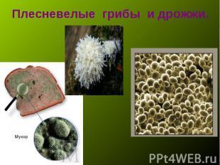 что играло какие продукты поражает гриб мукор сцепления ЗИЛ