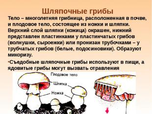 Тело – многолетняя грибница, расположенная в почве, и плодовое тело, состоящее и