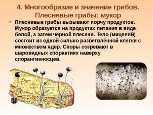 Плесневые грибы вызывают порчу продуктов. Мукор образуется на продуктах питания