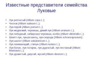 Лук репчатый (Allium cepa L.); Лук репчатый (Allium cepa L.); Чеснок (Allium sat