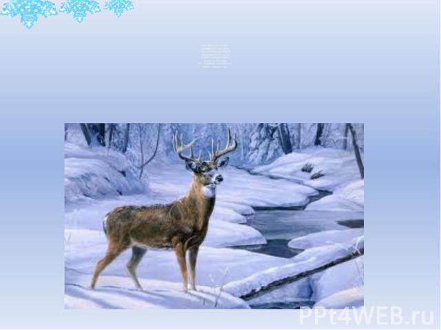 Хоть верь, хоть не верь - Пробежал по лесу зверь. Нёс на лбу он неспроста Два развесистых куста. Словно царскую корону, Носит он свои рога, Ест лишайник, мох зелёный, Любит снежные луга.