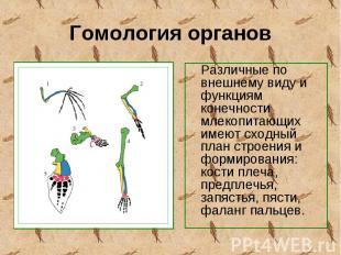 Различные по внешнему виду и функциям конечности млекопитающих имеют сходный пла