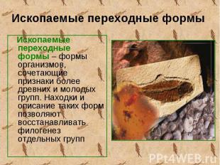 Ископаемые переходные формы – формы организмов, сочетающие признаки более древни