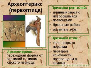 Археоптерикс – переходная форма от рептилий к птицам юрского периода. Археоптери