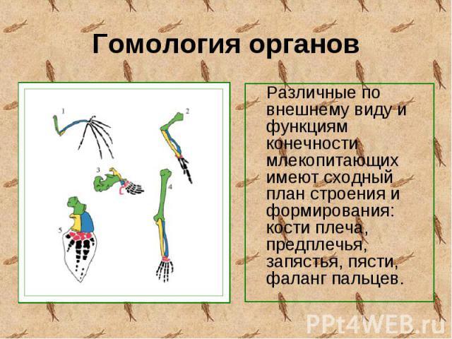 Различные по внешнему виду и функциям конечности млекопитающих имеют сходный план строения и формирования: кости плеча, предплечья, запястья, пясти, фаланг пальцев. Различные по внешнему виду и функциям конечности млекопитающих имеют сходный план ст…