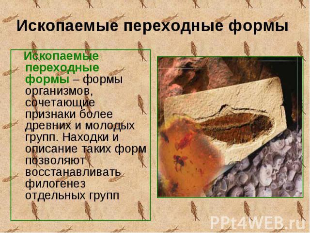 Ископаемые переходные формы – формы организмов, сочетающие признаки более древних и молодых групп. Находки и описание таких форм позволяют восстанавливать филогенез отдельных групп Ископаемые переходные формы – формы организмов, сочетающие признаки …